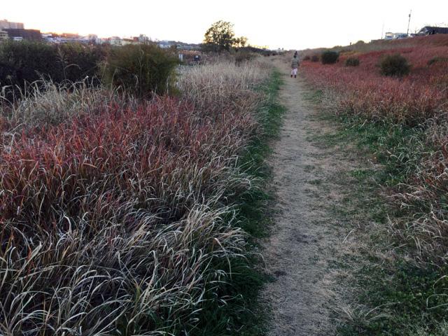 枯れた草木で、いがいと明るくカラフルな河川敷