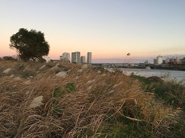 枯れすすきの原から、多摩川と対岸の二子新地がのぞめる1