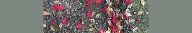 岡本公園の紅葉
