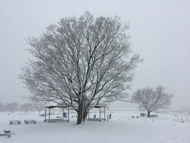 鎌田の樹氷