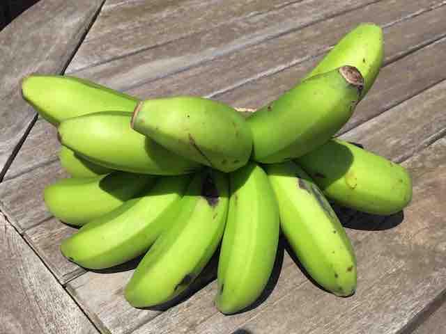 島バナナ2