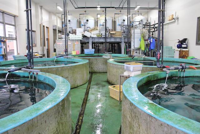 土佐清水の活魚槽