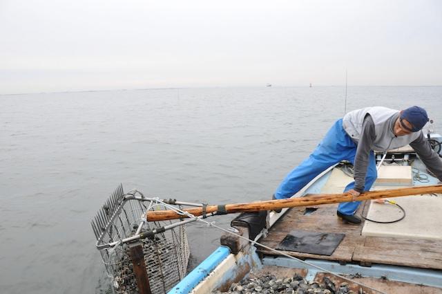 ホンビノス漁1