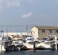 「港町ブルース〜船橋のホンビノス漁」(後編)が掲載(「地域人73号」)